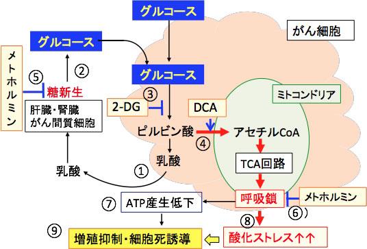 乳酸 アシドーシス